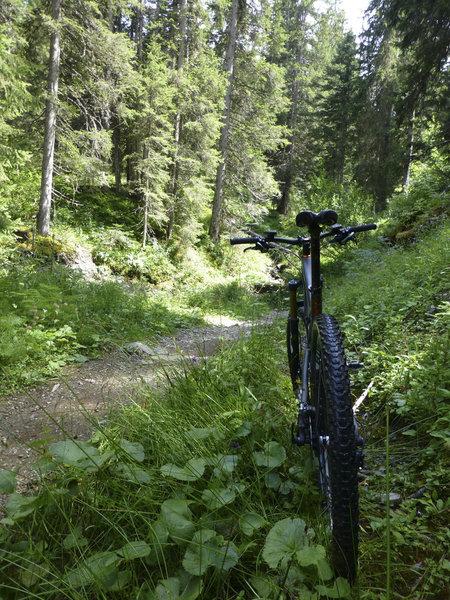 A piece of singletrack along the tour du plateau de Loex.