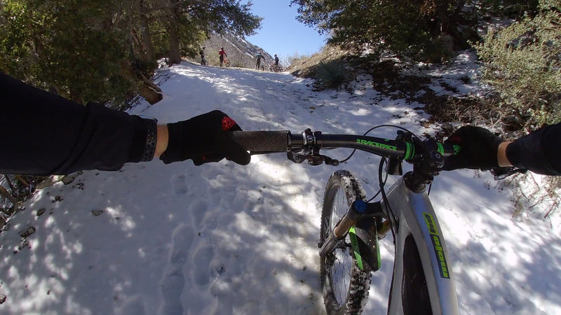 Pushing up in the snow