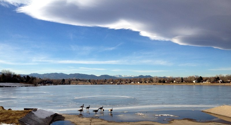 Geese on the frozen pond at Lake Arbor