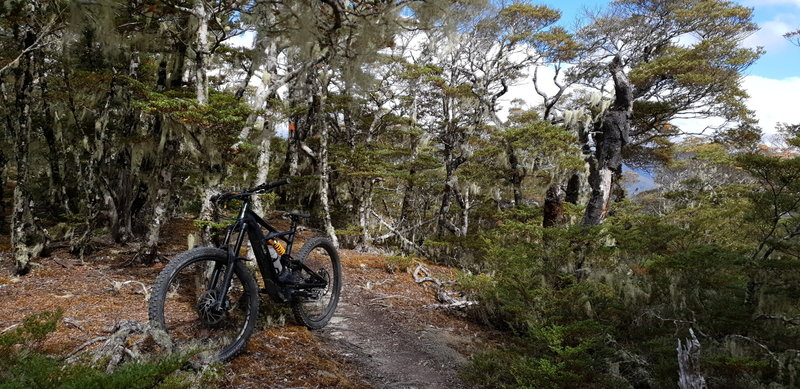 On Maitland Ridge Trail