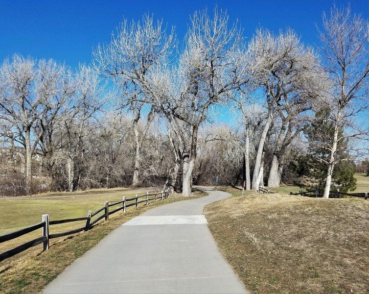 Ralston Creek Trail trees
