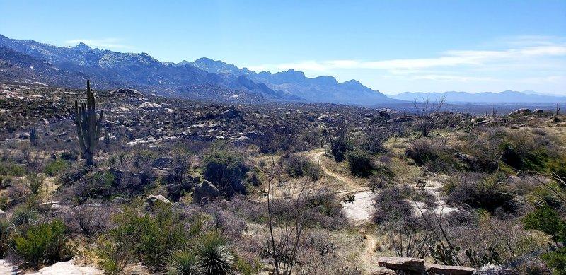 Cowboy Slickrock trail looking south