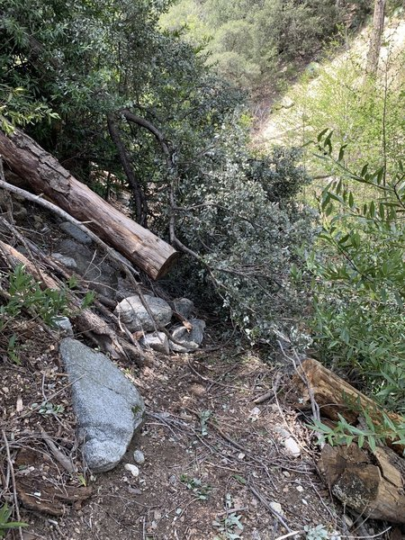 First major fallen tree obstacle near top