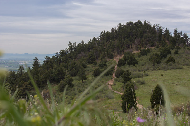 At the top of the ridge, overlooking the Zorro Trail.