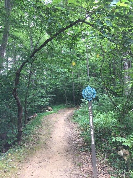 Forney Creek Trail