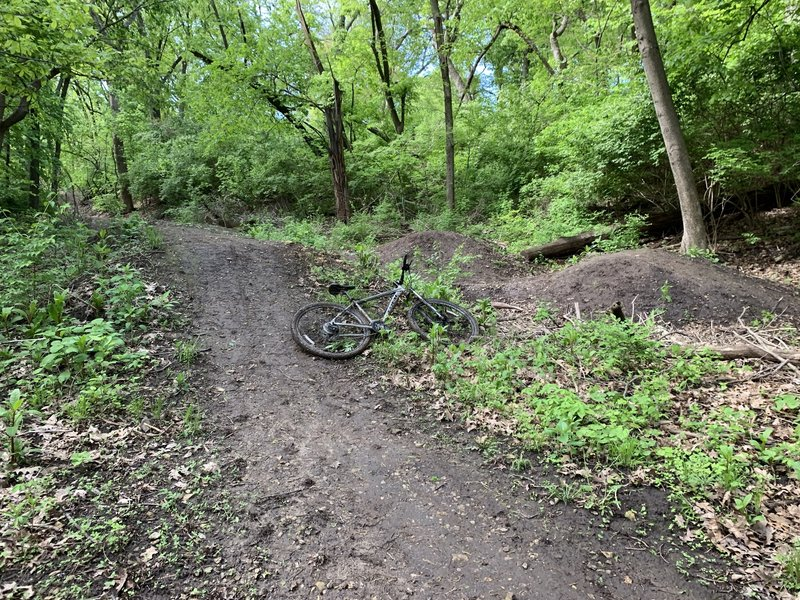 The series of jumps at the bottom of the trail. (Bike for scale)