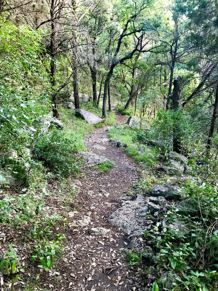 Hurst Hollow Trail heading back towards Hamilton Greenbelt I Trail