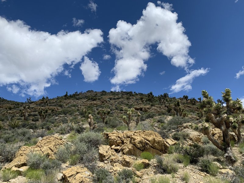 Looking up the hills to the west of the trail near the watering hole.