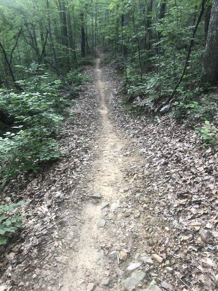 Mega flow on Hare, headed towards the Anniston TH.  No brakes necessary.
