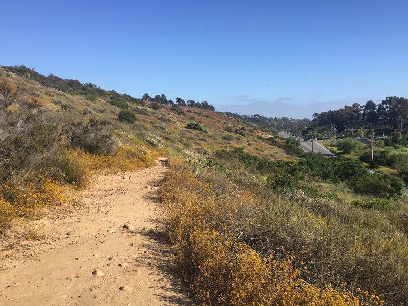Singletrack in Florida Canyon, looking south.