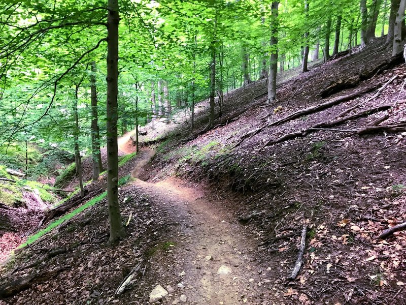 Awesome flowing, fast trail