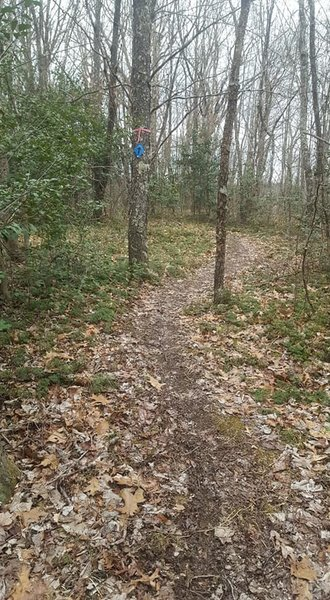A pic of a trail segment featuring the blue diamond directional markers. Just follow the blue diamonds!