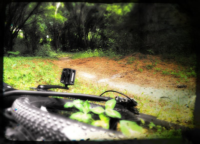 Trail winds in and out of the woods with smooth rhythm. This spot smells very piney. Nice little trail!