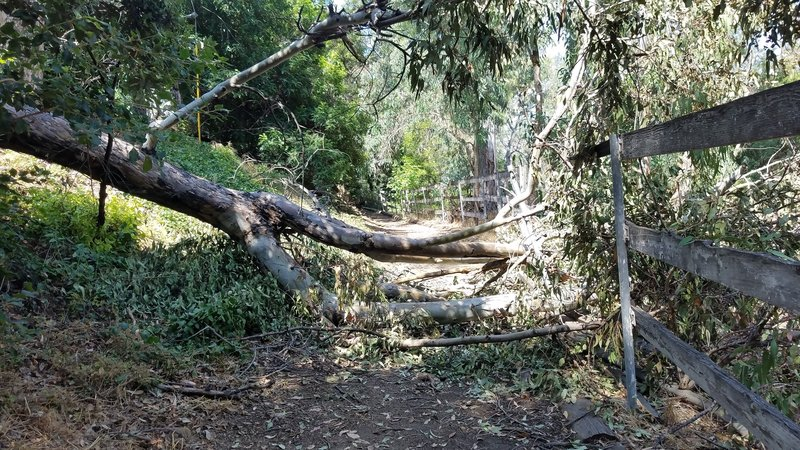 (06-23-19) Fallen tree on trail. Take alternate route back down Green Acres Drive and get back on trail at North Richmond Knoll.