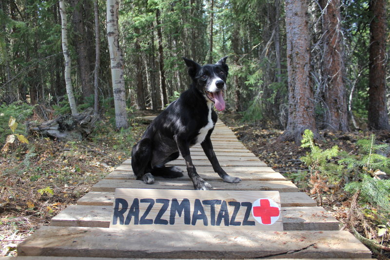 This trail is named 'Razzmatazz' in honor of Grand County Search and Rescue Dog 'Taz,' who passed away December 2018. You forever left a paw print on our hearts!