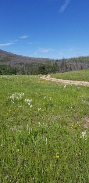 Open meadow in old burn area.