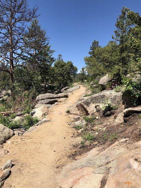 Near the start of Limber Pine Trail.