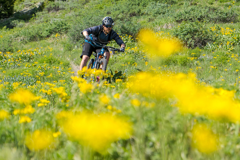 Early summer is the time to hit these trails - the wildflowers are crazy.