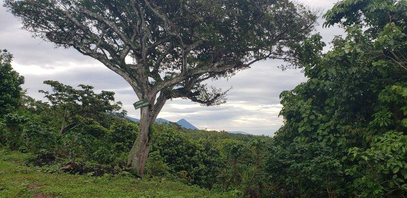 Vista lejana del Volcán de Izalco, desde la Finca Tequendama.