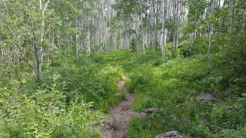 Williams Trail