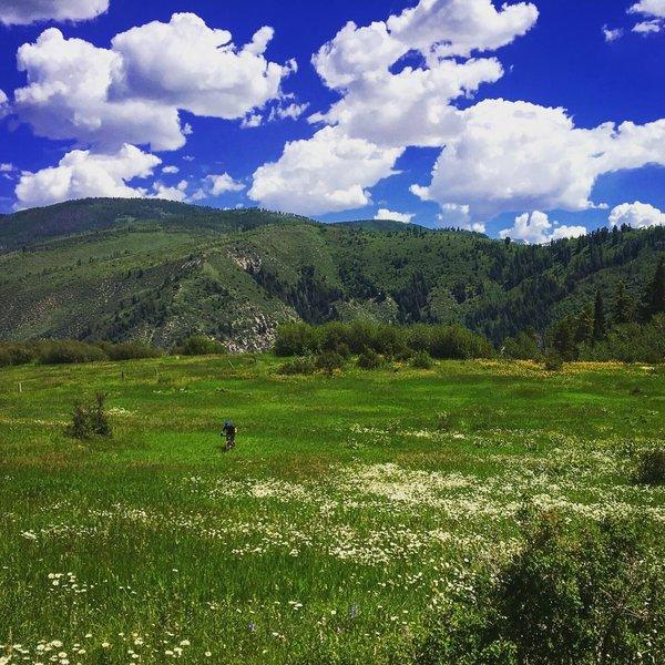 Overlooking the meadow
