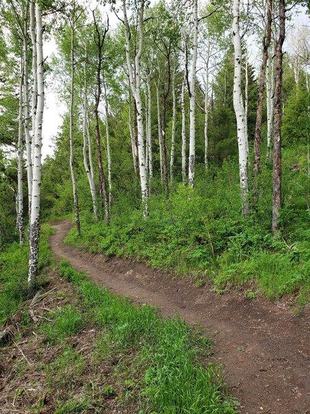 Upper Ute Trail