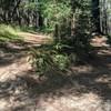 Marsh and Ridge Trails.