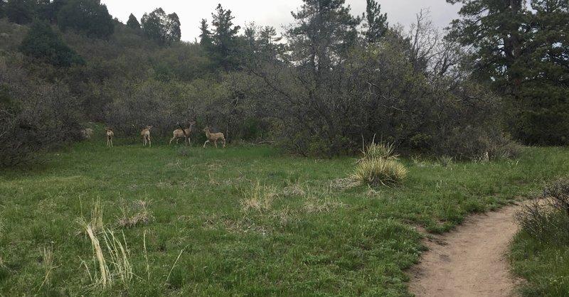 Plenty of curious wildlife nearby Dawson's Butte.