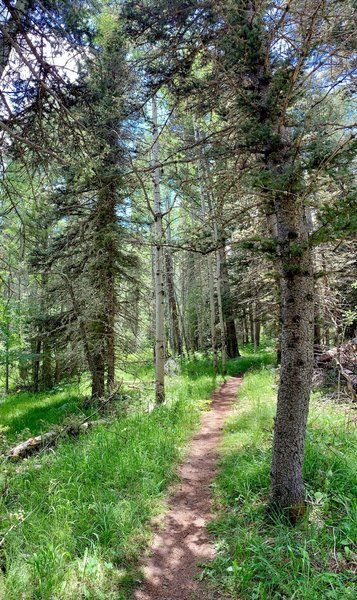 Pristine trails...super easy to access and very well marked !