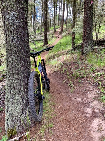 Coyote Trail singletrack...super well-maintained and thought out!
