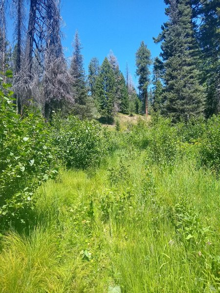 """Consider other trails at Banner Ridge Trailhead; """"Banner Ridge Trail"""" itself is overgrown as of July 28, 2019. We pushed our bikes through high brush and reached the base of this hill after ~10mins. The trail and markers end at the hill. Turned back."""