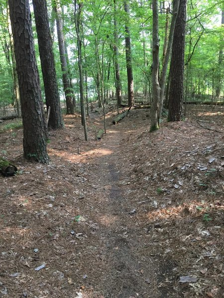 Pretty typical trail view. What's missing are the tree roots.