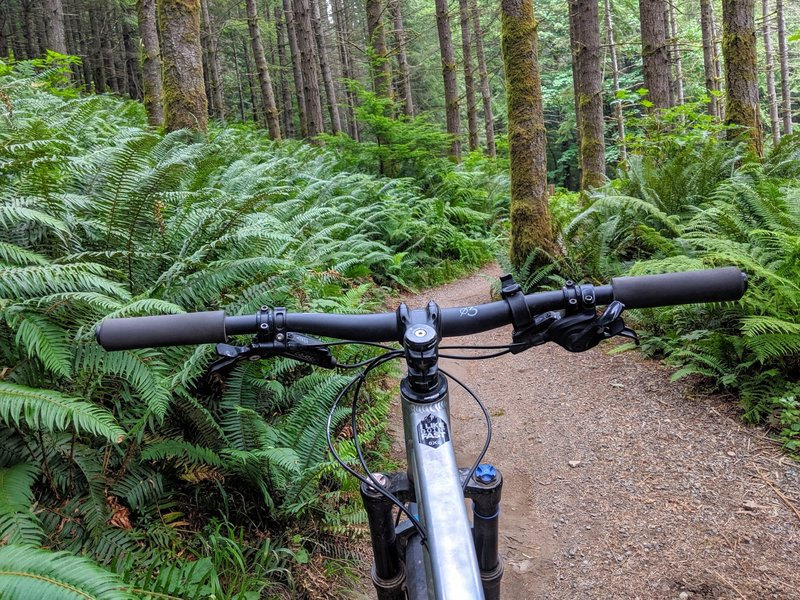 Near the beginning of the climb on the connector to Master Link trail. So many beautiful ferns!