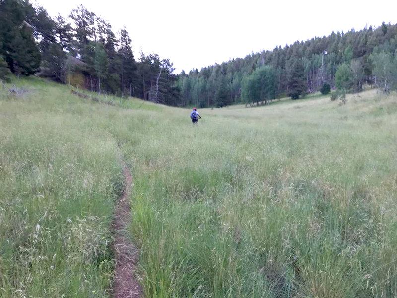 Descending Crowe Gulch