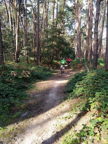 Trails in wood Moerbeke.