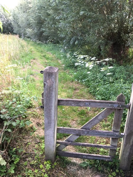 Gate for sheeps