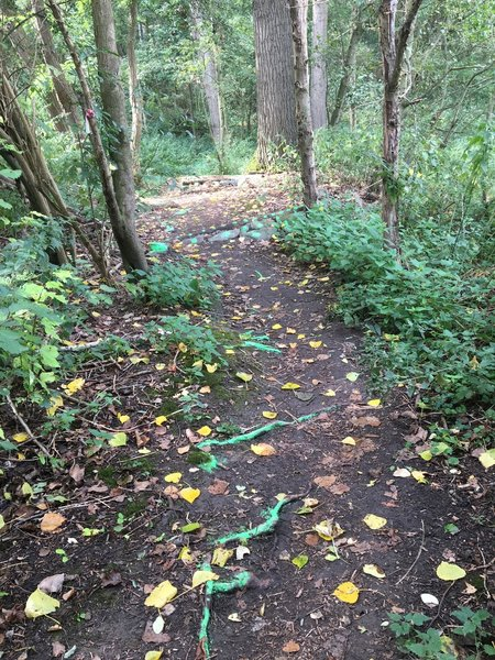 Root trail