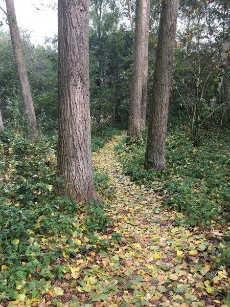 Easy singletracks in the wood