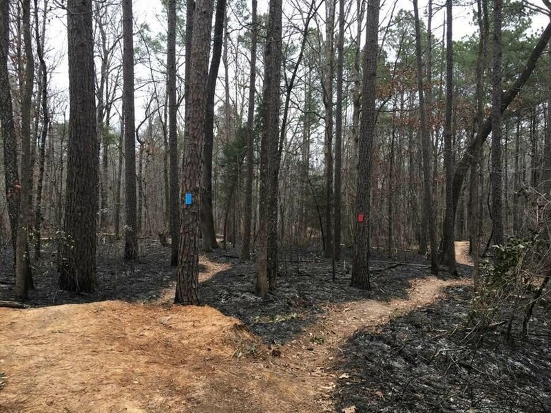 A few days after the controlled burn.
