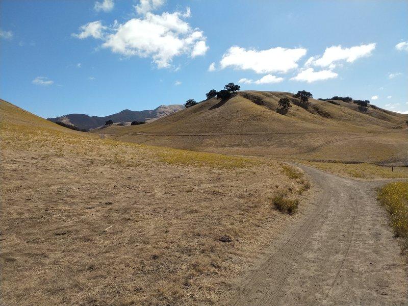 Rolling hills.