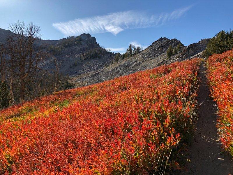 Stunning fall colors near the Ross Peak Saddle.