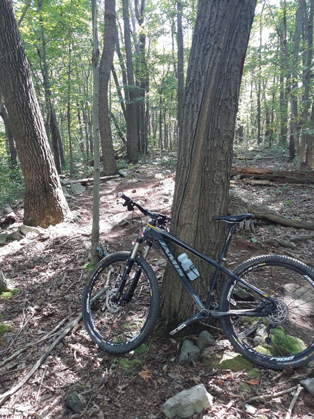 Flat trails here with some roots and rocks, links to McCune if you want to get in a longer ride by parking at Sugarloaf.