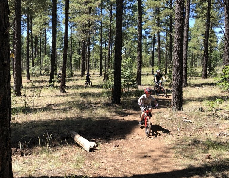 This trail is well cared for and good for all skill levels. Plus, it's never too early to acquire some technical riding skills (says my 5-year-old).