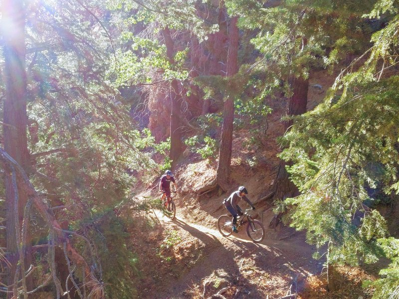 Lots of people climb the road, but going up the singletrack is lovely and not too challenging.