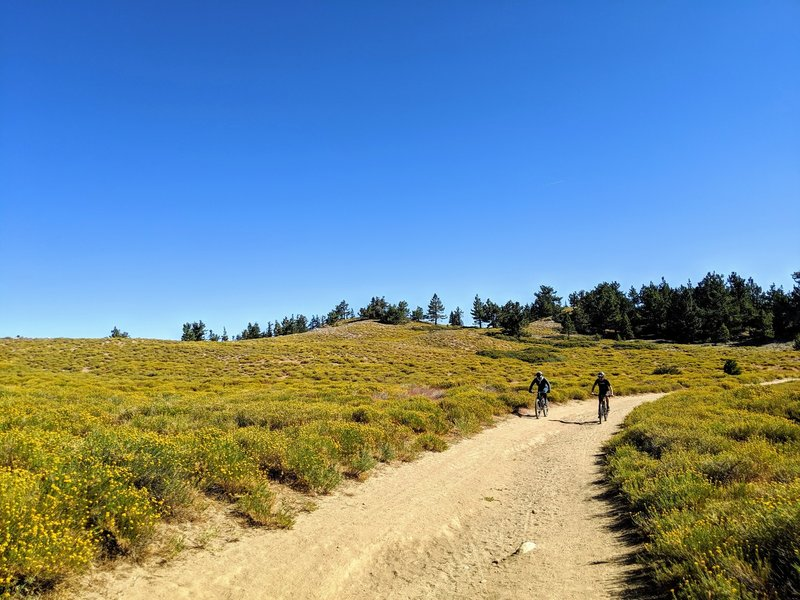 The road up to the peak traverses some epic meadows.