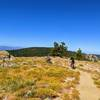 Continue west of the asphalt at the top of the Mt. Pinos Road for a beautiful lookout with 300° views.