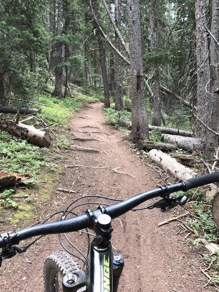 More roots! Nice wide trail with some Aspen groves.