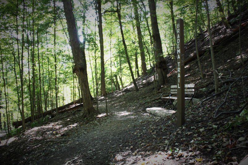 Mid section of the trail as it cross Biddle. Depending on recent rainfall, the section below may be muddy even though the upper is fine.