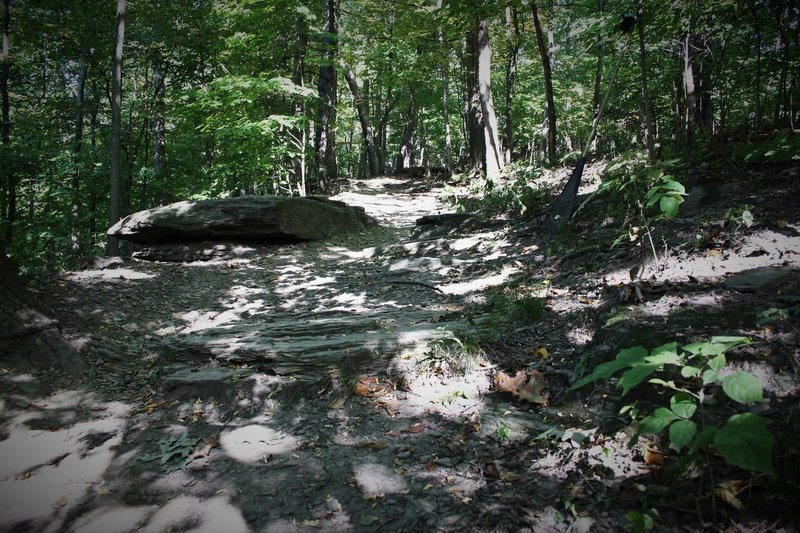 There are rocks to drop off or roll over, throughout the upper section of this trail.
