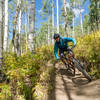 Once you get into the aspens, 401 starts getting interesting and fun!